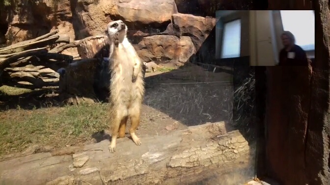 """Больные дети смогли """"посетить"""" зоопарк с помощью Google Glass_yasnoponyatno.com"""
