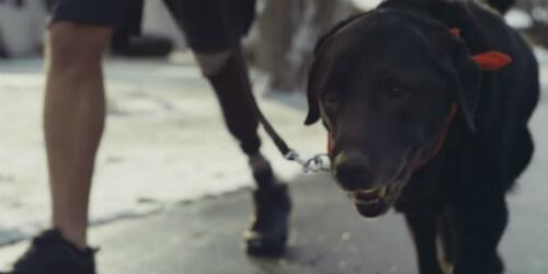 Компания Pedigree опубликовала очередной ролик из серии Feed the Good