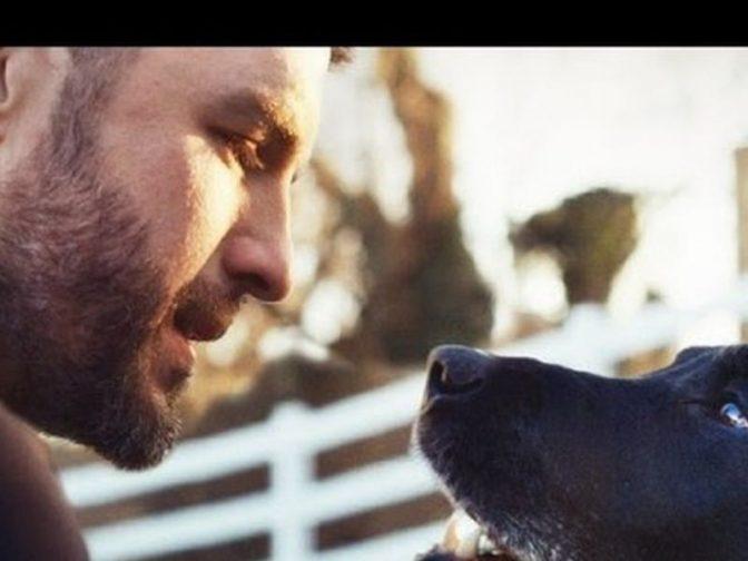 Рекламный ролик Pedigree, посвященный домашним собакам: «Тем, кто делает нас лучше»