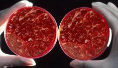 Билл Гейтс инвестировал средства в создание дешевого искусственного мяса